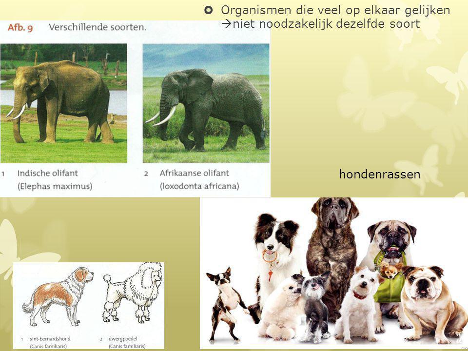 hondenrassen  Organismen die veel op elkaar gelijken  niet noodzakelijk dezelfde soort