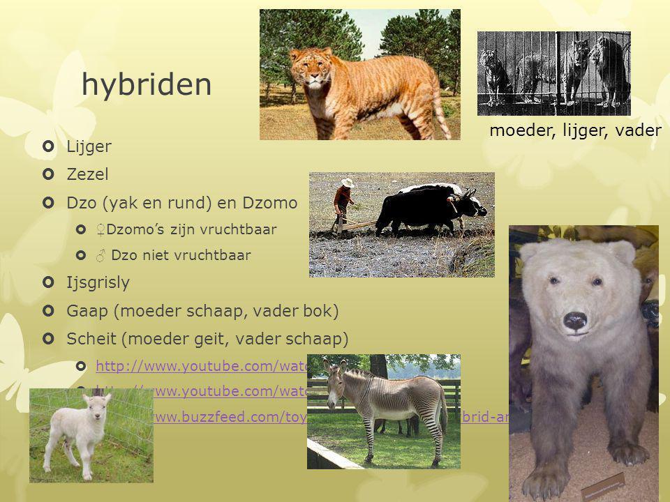 hybriden  Lijger  Zezel  Dzo (yak en rund) en Dzomo  ♀ Dzomo's zijn vruchtbaar  ♂ Dzo niet vruchtbaar  Ijsgrisly  Gaap (moeder schaap, vader bo