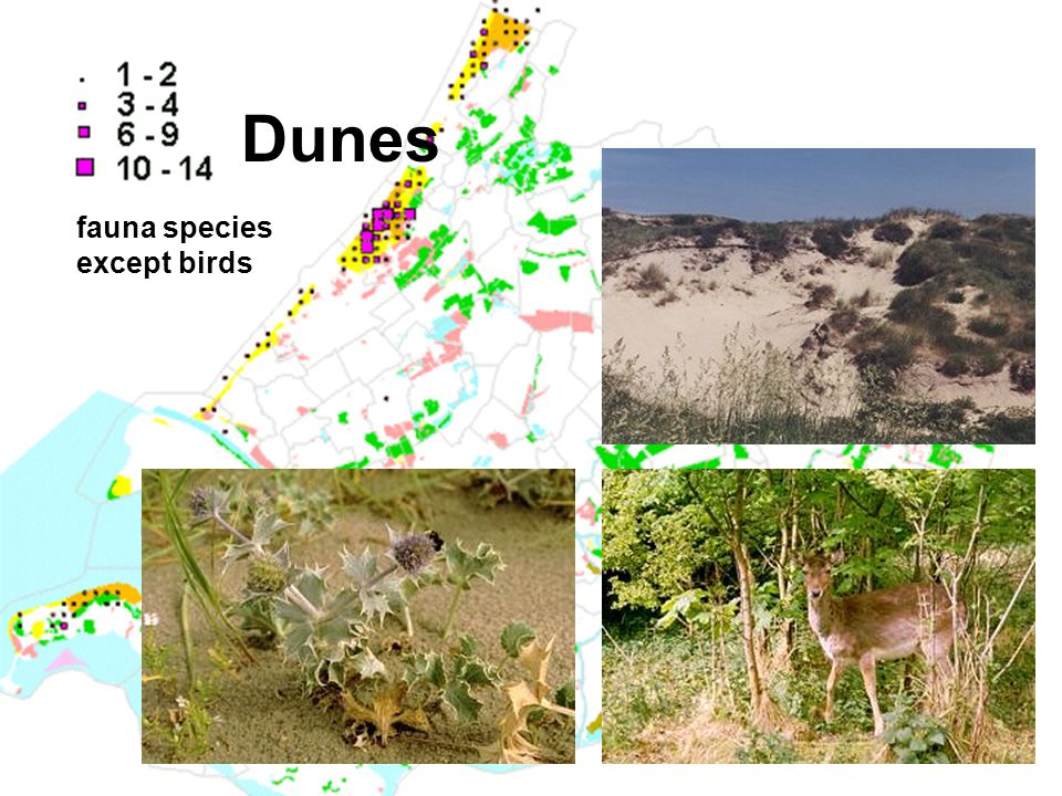 Dunes fauna species except birds