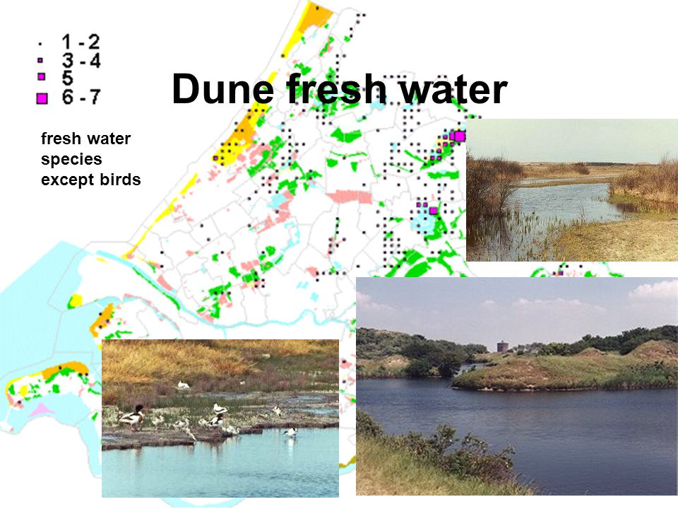 Dune fresh water fresh water species except birds