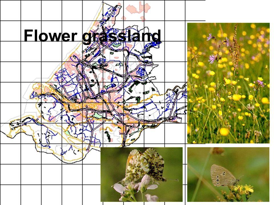 Flower grassland