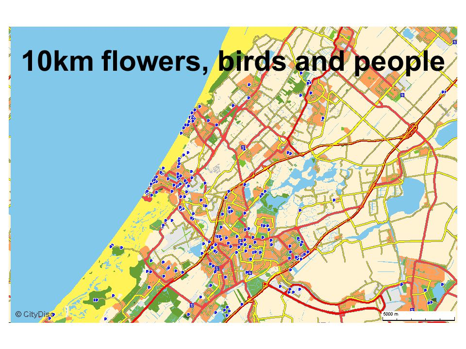 10km flowers, birds and people