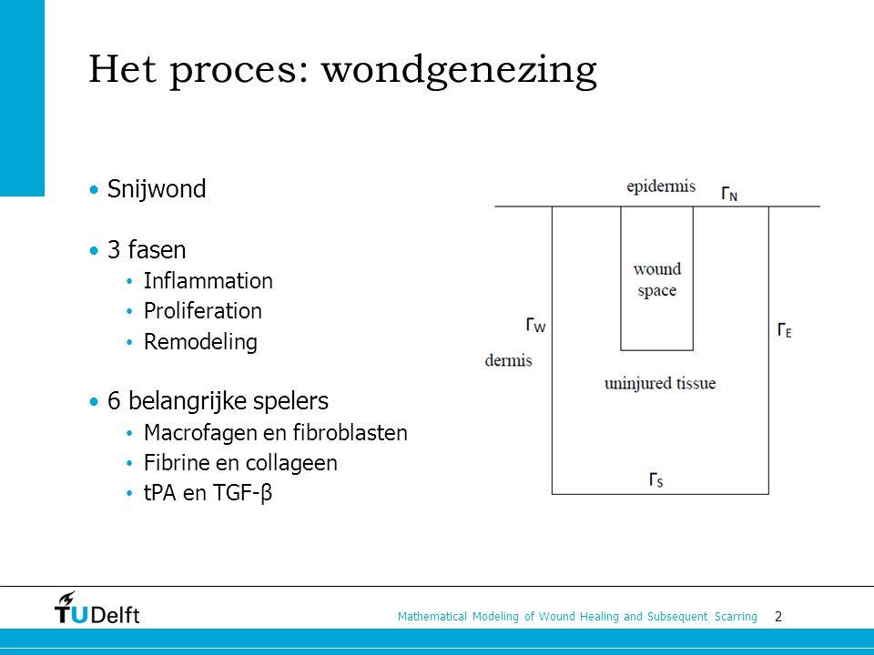 3 Mathematical Modeling of Wound Healing and Subsequent Scarring Inflammation (ontsteking) Gestold bloed, fibrine tPA wordt aangemaakt Afbraak fibrine Macrofagen arriveren