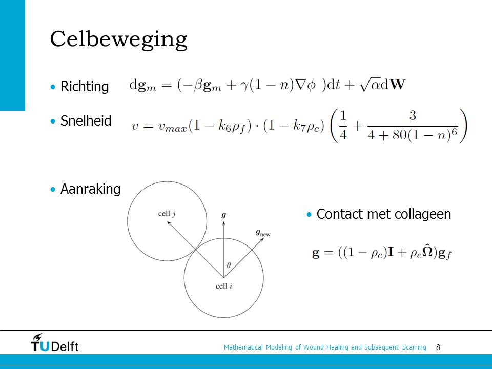 8 Mathematical Modeling of Wound Healing and Subsequent Scarring Celbeweging Richting Snelheid Aanraking Contact met collageen
