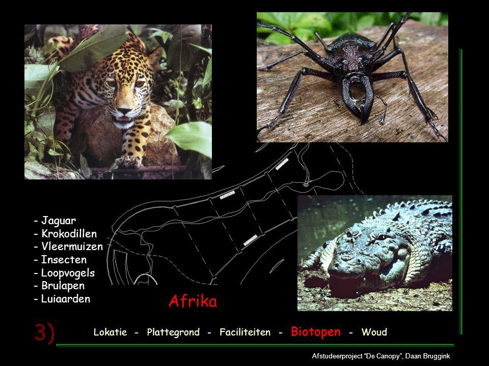 Afstudeerproject De Canopy , Daan Bruggink 3) - Jaguar - Krokodillen - Vleermuizen - Insecten - Loopvogels - Brulapen - Luiaarden Lokatie - Plattegrond - Faciliteiten - Biotopen - Woud Afrika