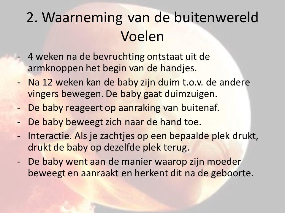 2. Waarneming van de buitenwereld Voelen -4 weken na de bevruchting ontstaat uit de armknoppen het begin van de handjes. -Na 12 weken kan de baby zijn