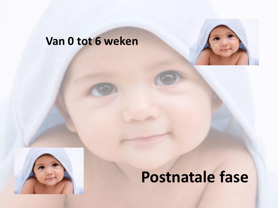 Wat gaan we behandelen 1.De geboorte 2.Eerste onderzoeken na de geboorte 3.Eerste ouder - kindcontact 4.De waarneming van de baby -zien -Horen -Proeven en ruiken -Voelen, de tastzin 5.Betekenis van de postnatale fase voor de ouders -Synchronisatie en stabilisatie -Sensiviteit en responsiteit 6.Babyblues/ ontzwangeren 7.Postnatale depressie