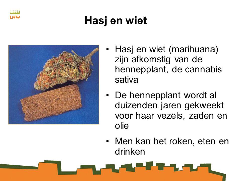 Hasj en wiet Hasj en wiet (marihuana) zijn afkomstig van de hennepplant, de cannabis sativa De hennepplant wordt al duizenden jaren gekweekt voor haar vezels, zaden en olie Men kan het roken, eten en drinken