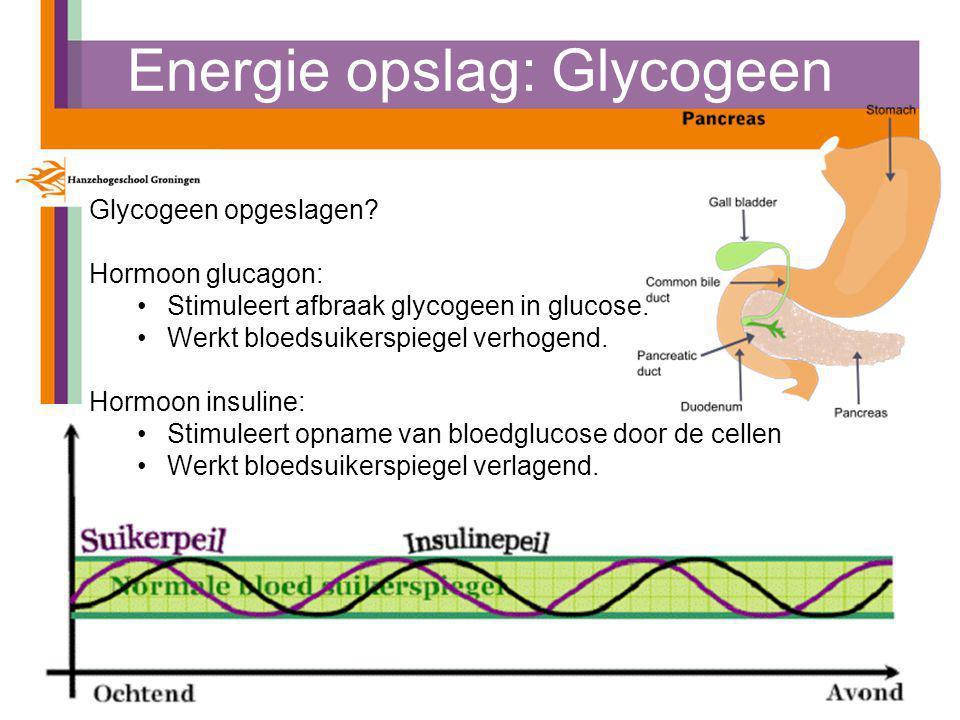 Energie opslag: Glycogeen Instituut voor Sportstudies: Sport, Gezondheid en Management Glycogeen opgeslagen.