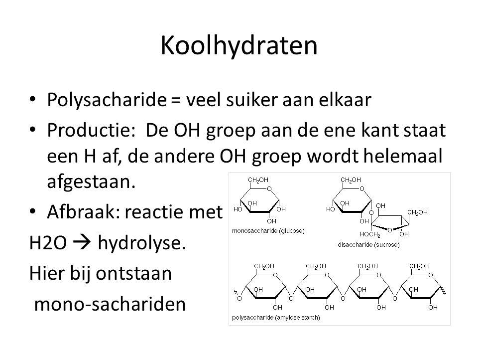 Koolhydraten Polysacharide = veel suiker aan elkaar Productie: De OH groep aan de ene kant staat een H af, de andere OH groep wordt helemaal afgestaan.