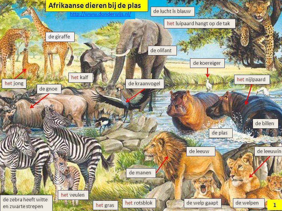 het veulen de olifant het luipaard hangt op de tak de giraffe de gnoe de welp gaapt het rotsblok de leeuw het nijlpaard de leeuwin het kalf de manen de lucht is blauw de kraanvogel het gras de billen de koereiger de zebra heeft strepen witzwarthet jong de plas 2 http://www.donderwijs.nl/ Afrikaanse dieren bij de plas