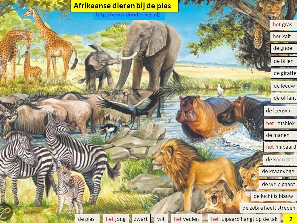het veulen de olifant het luipaard hangt op de tak de giraffe de gnoe de welp gaapt het rotsblok de leeuw het nijlpaard de leeuwin het kalf de manen d