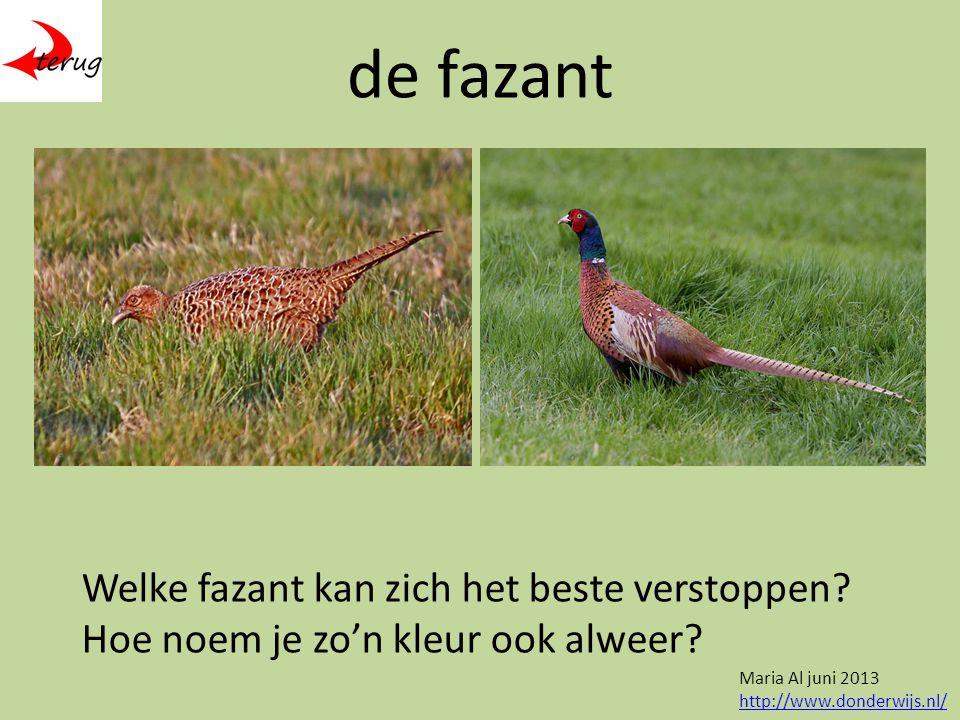 de fazant Welke fazant kan zich het beste verstoppen.