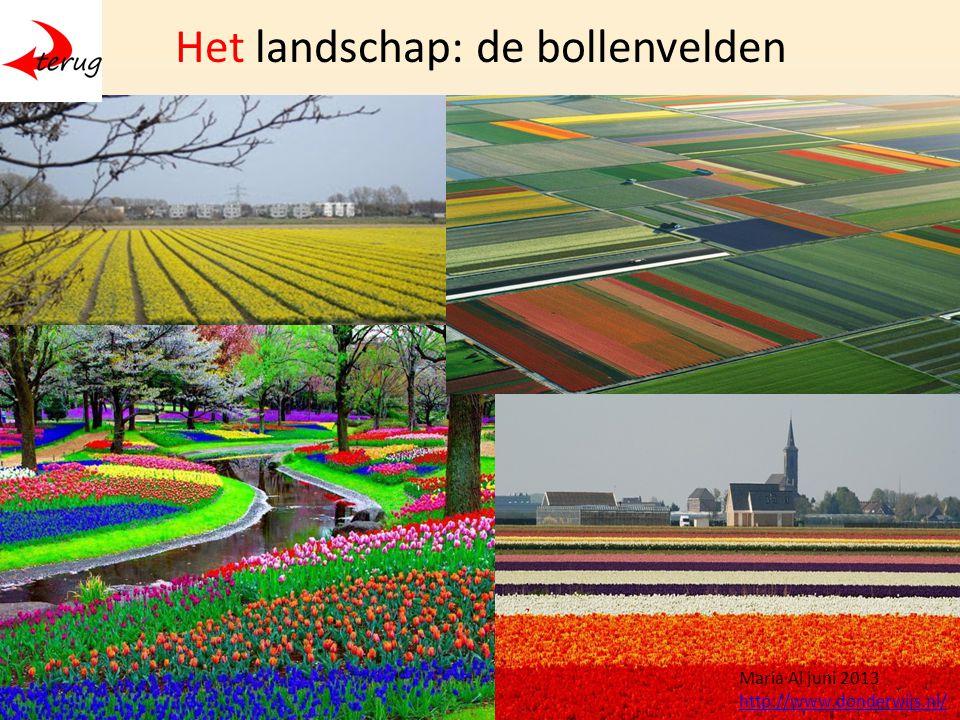 Het landschap: de bollenvelden Maria Al juni 2013 http://www.donderwijs.nl/
