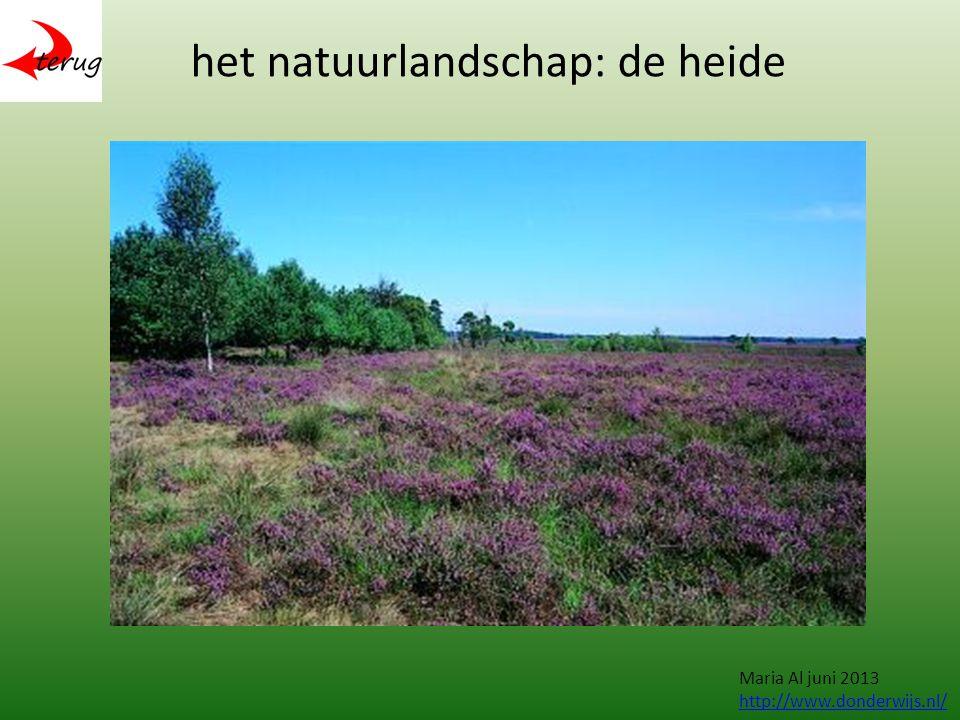 het natuurlandschap: de heide Maria Al juni 2013 http://www.donderwijs.nl/