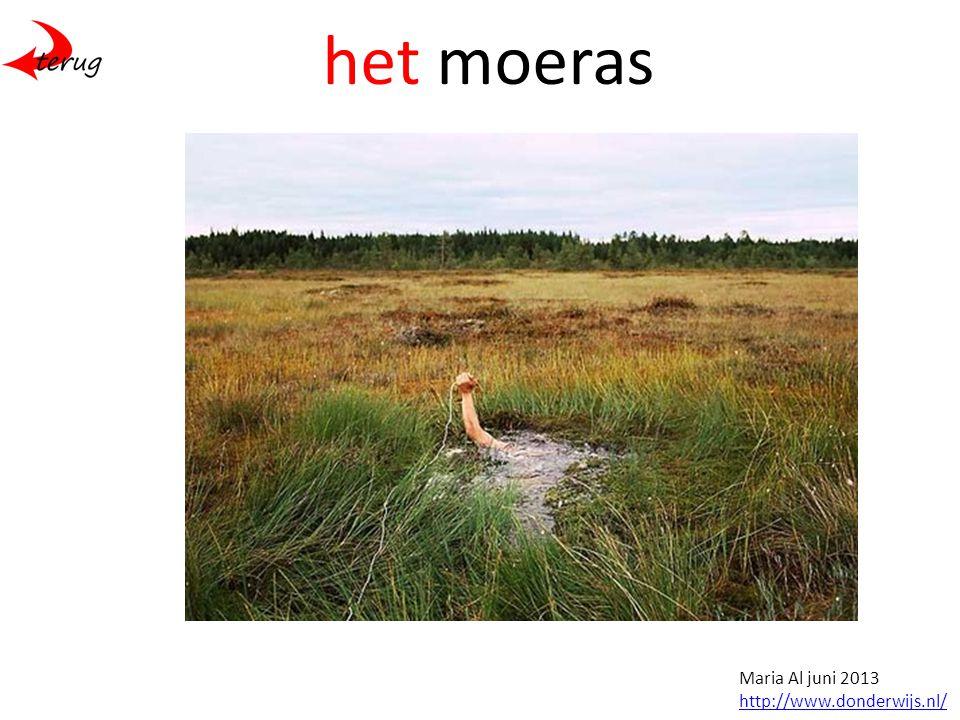 het moeras Maria Al juni 2013 http://www.donderwijs.nl/