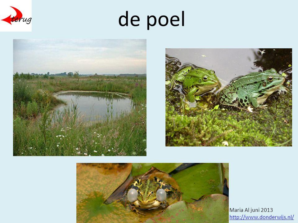 de poel Maria Al juni 2013 http://www.donderwijs.nl/