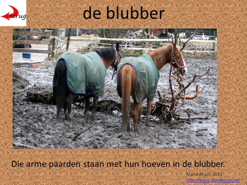 de blubber Die arme paarden staan met hun hoeven in de blubber.