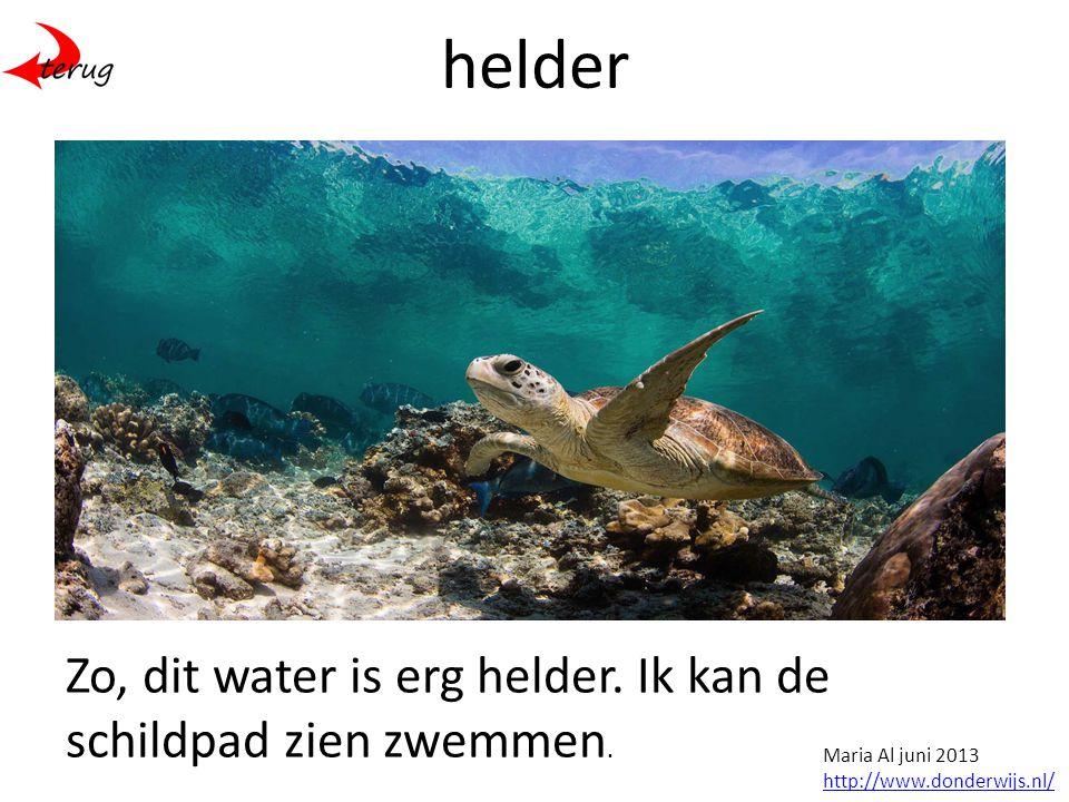 helder Zo, dit water is erg helder. Ik kan de schildpad zien zwemmen.