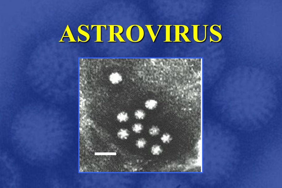 ASTROVIRUS