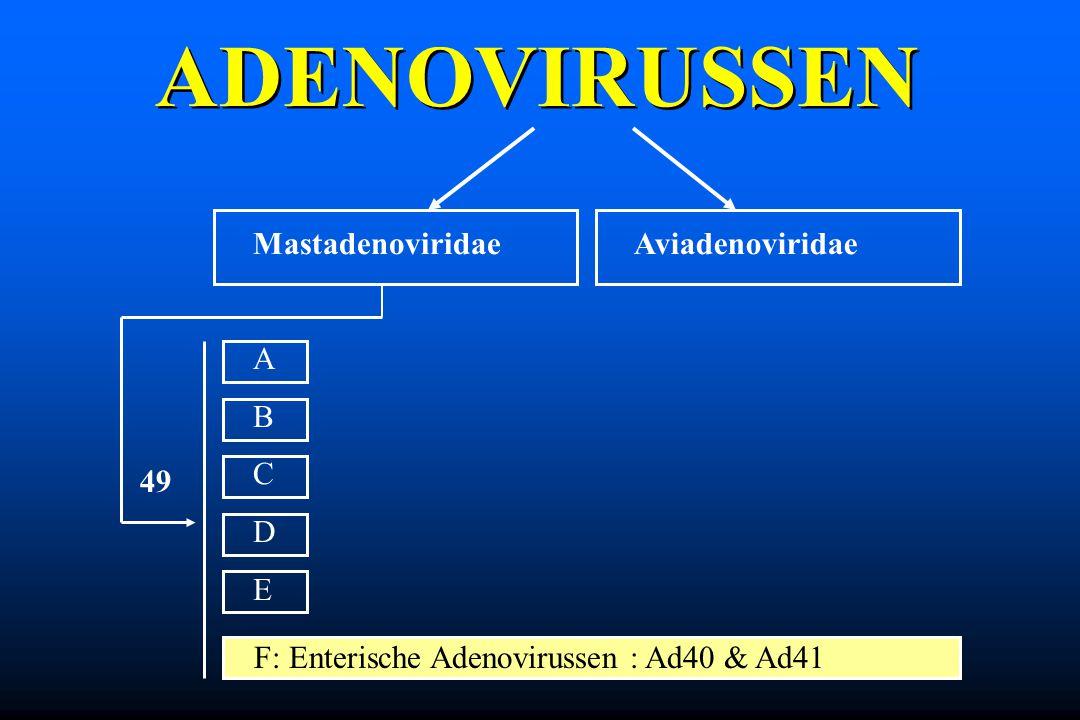 ADENOVIRUSSEN Mastadenoviridae A B C D E Aviadenoviridae 49 F: Enterische Adenovirussen : Ad40 & Ad41