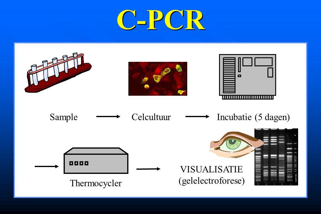 SampleCelcultuurIncubatie (5 dagen) Thermocycler VISUALISATIE (gelelectroforese) C-PCR