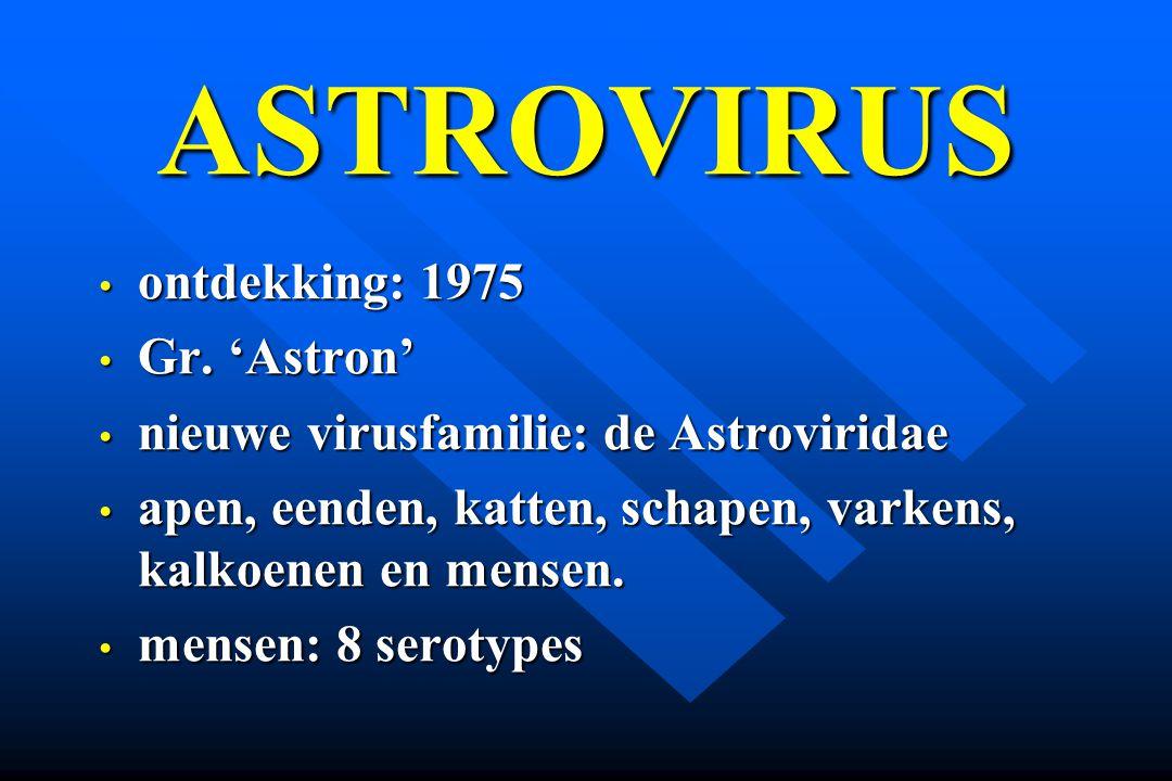 ASTROVIRUS ontdekking: 1975 ontdekking: 1975 Gr. 'Astron' Gr. 'Astron' nieuwe virusfamilie: de Astroviridae nieuwe virusfamilie: de Astroviridae apen,