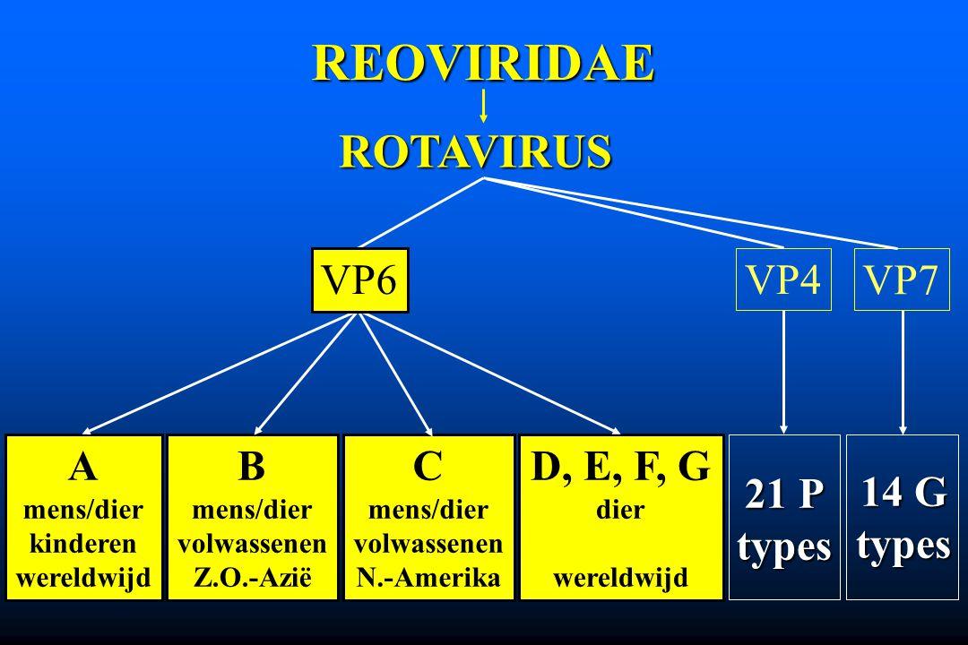 REOVIRIDAE ROTAVIRUS VP4 VP7 A mens/dier kinderen wereldwijd D, E, F, G dier wereldwijd B mens/dier volwassenen Z.O.-Azië C mens/dier volwassenen N.-A