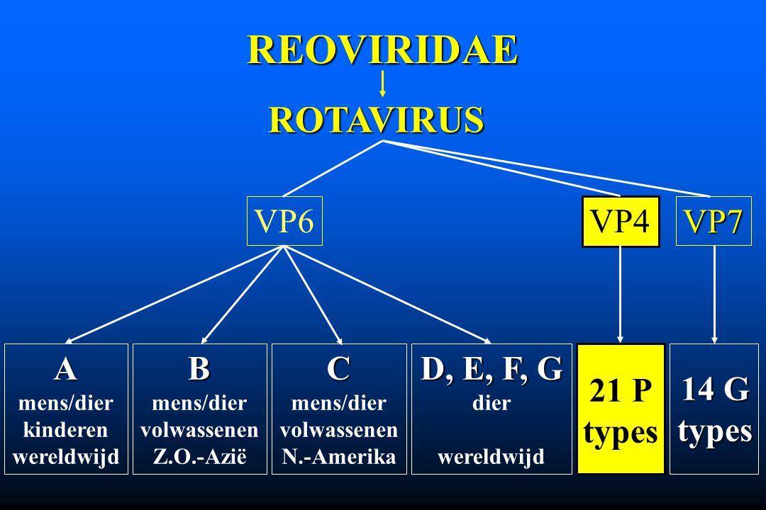 REOVIRIDAE ROTAVIRUS VP4 VP7 A mens/dier kinderen wereldwijd D, E, F, G dier wereldwijdB mens/dier volwassenen Z.O.-AziëC mens/dier volwassenen N.-Ame