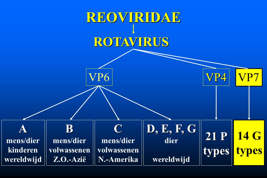REOVIRIDAE ROTAVIRUS VP6VP4 VP7 A mens/dier kinderen wereldwijd D, E, F, G dier wereldwijdB mens/dier volwassenen Z.O.-AziëC mens/dier volwassenen N.-
