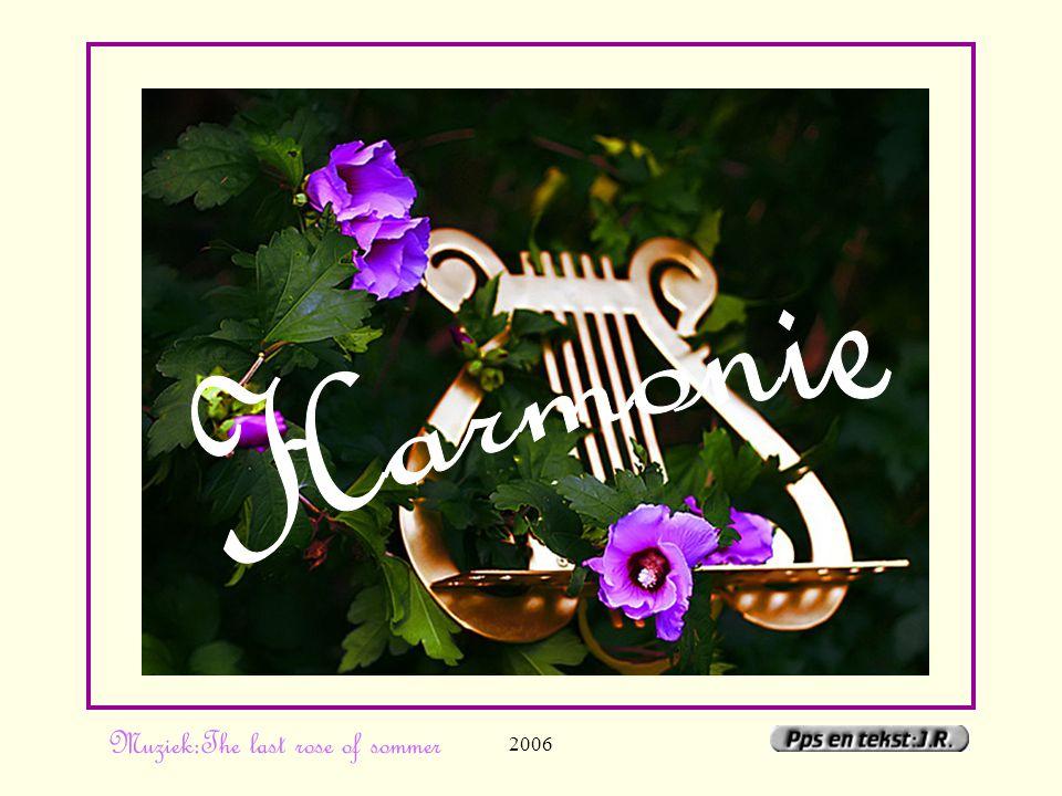20061 Muziek:The last rose of sommer
