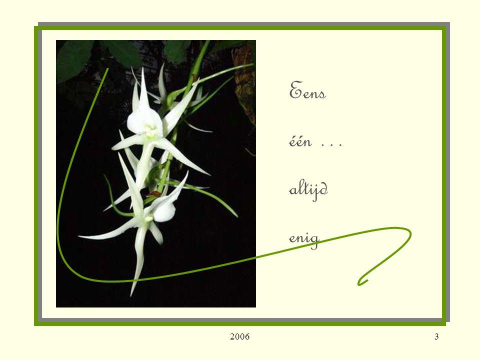 20064 In het nú moment ligt … mijn geschenk