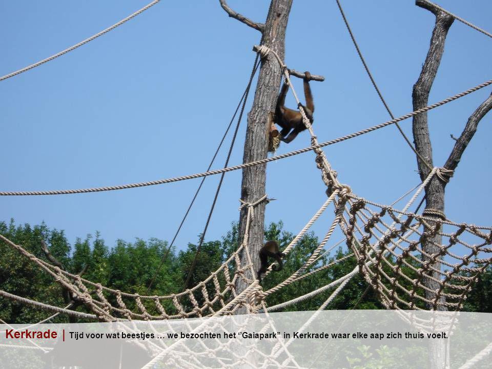 Kerkrade | Tijd voor wat beestjes … we bezochten het ''Gaiapark'' in Kerkrade waar elke aap zich thuis voelt.