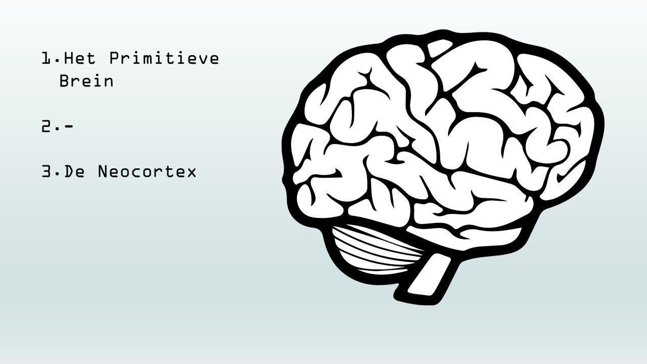 1.Het Primitieve Brein 2.- 3.De Neocortex