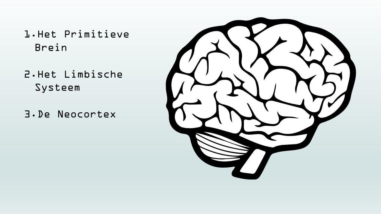 1.Het Primitieve Brein 2.Het Limbische Systeem 3.De Neocortex