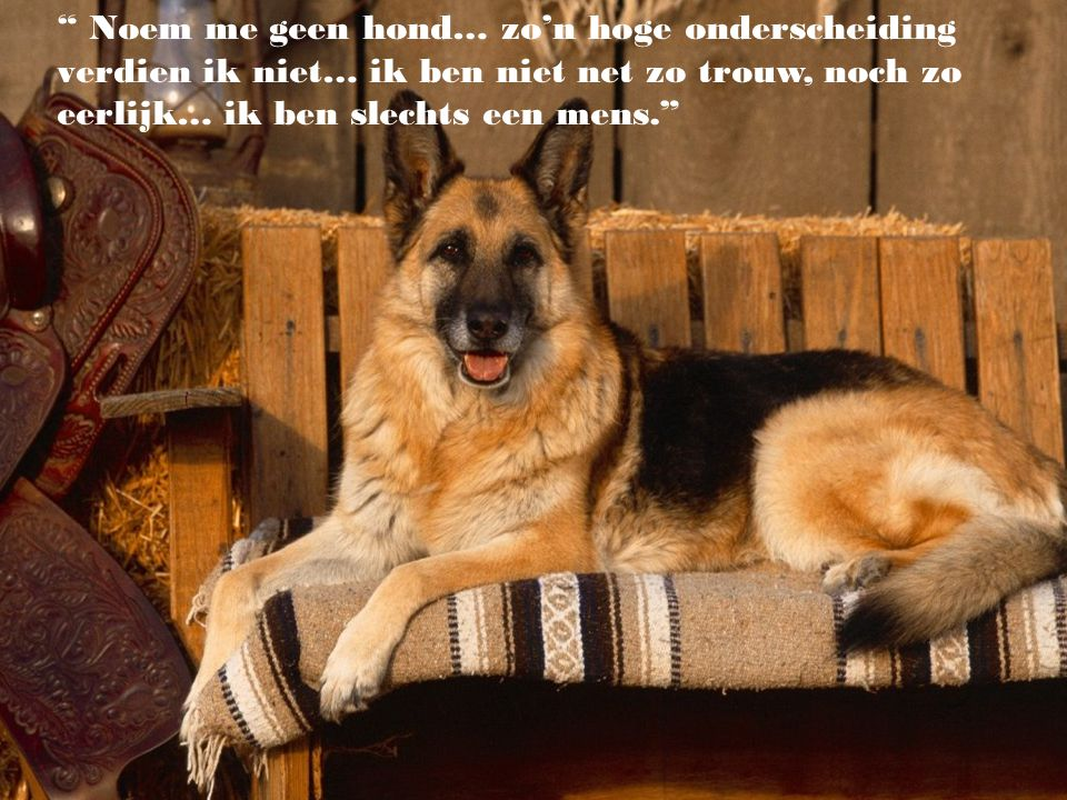 """""""We kunnen het hart van een mens beoordelen aan de manier waarop hij de dieren behandelt."""" (Immanuel Kant)"""