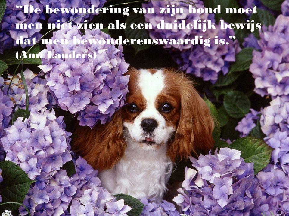 """""""Het is triest voor de mens dat, terwijl de hond de beste vriend van de mens is, de mens de slechtste vriend van de hond is."""" (Eduardo Lamazón)"""