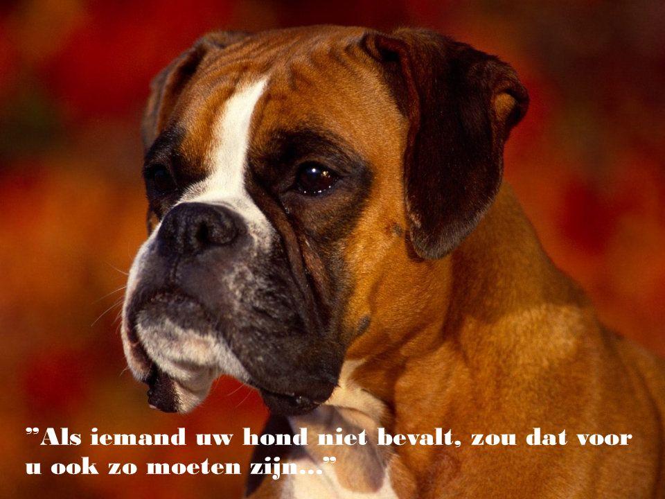 """""""Hij die zegt dat men geluk niet kan kopen, dacht niet aan puppies."""" (Gene Hill)"""