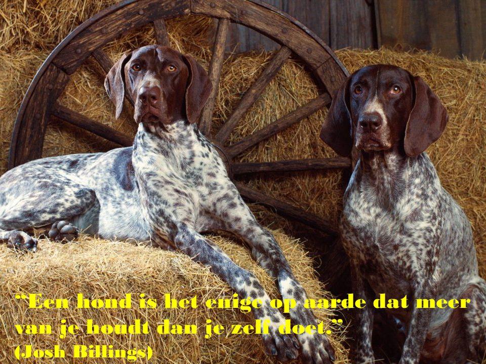 """""""Als iemand uw hond niet bevalt, zou dat voor u ook zo moeten zijn..."""""""
