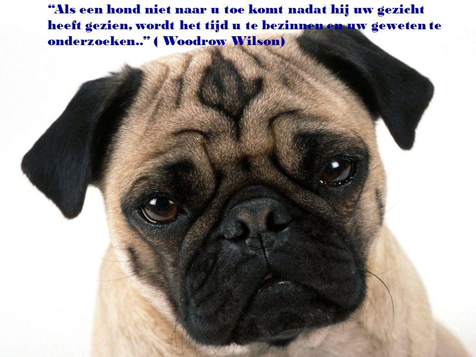 """""""Men kan zonder hond leven, maar dat is echt niet de moeite waard."""" (Heinz Rühmann)"""