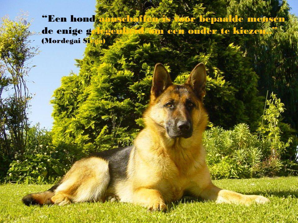 """""""Als een hond niet naar u toe komt nadat hij uw gezicht heeft gezien, wordt het tijd u te bezinnen en uw geweten te onderzoeken.."""" ( Woodrow Wilson)"""