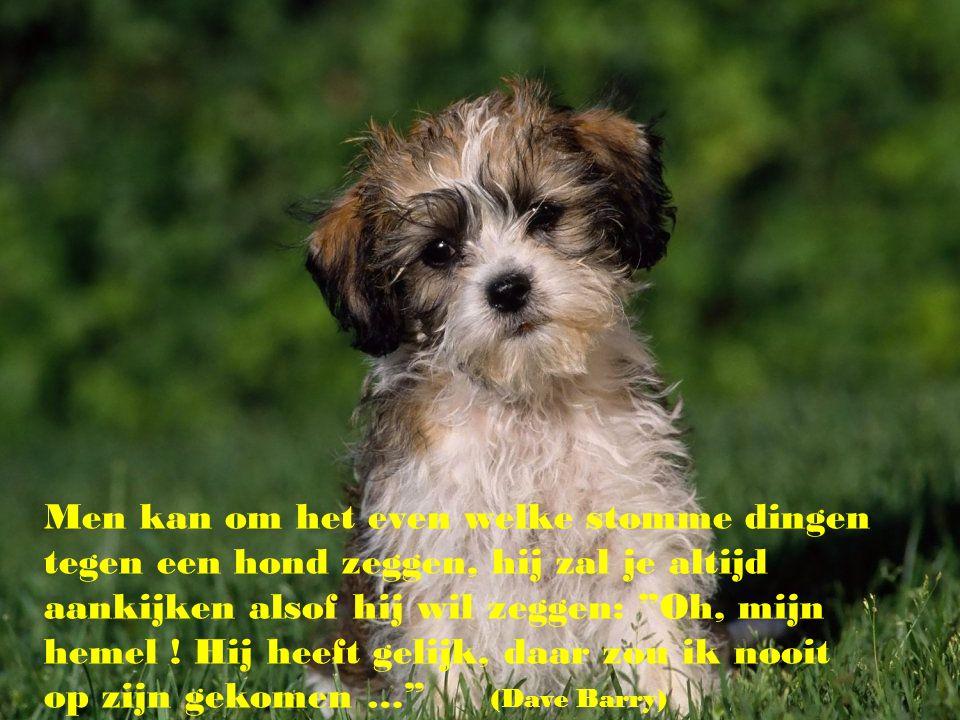 """""""Een hond aanschaffen is voor bepaalde mensen de enige gelegenheid om een ouder te kiezen.."""" (Mordegai Siega)"""