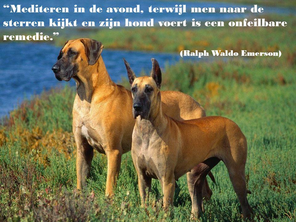 """Men kan om het even welke stomme dingen tegen een hond zeggen, hij zal je altijd aankijken alsof hij wil zeggen: """"Oh, mijn hemel ! Hij heeft gelijk, d"""