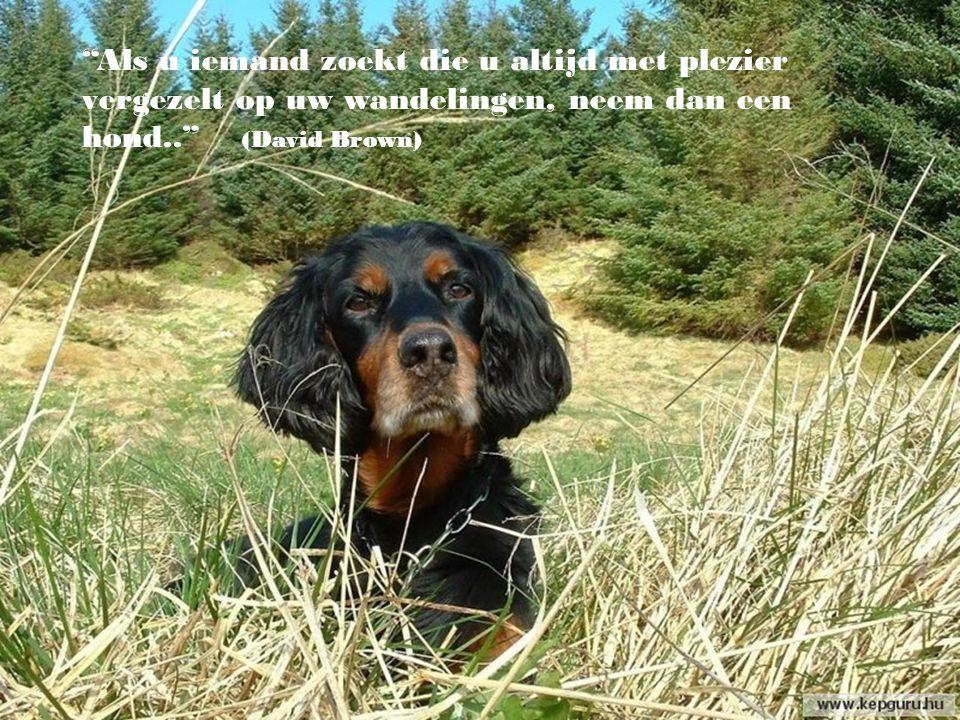 """""""Mediteren in de avond, terwijl men naar de sterren kijkt en zijn hond voert is een onfeilbare remedie."""" (Ralph Waldo Emerson)"""