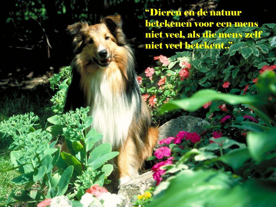 """""""Als u iemand zoekt die u altijd met plezier vergezelt op uw wandelingen, neem dan een hond.."""" (David Brown)"""