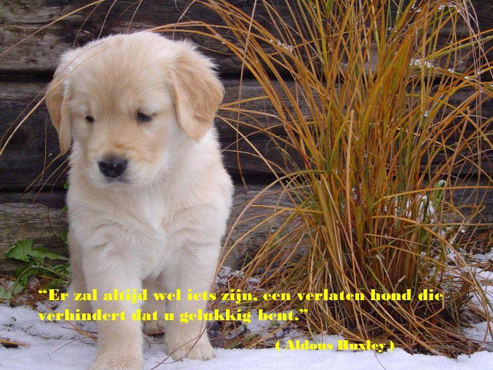 """""""Er bestaat geen betere psychiater ter wereld dan een puppy die je gezicht likt."""" (Woodrow Wilson )"""
