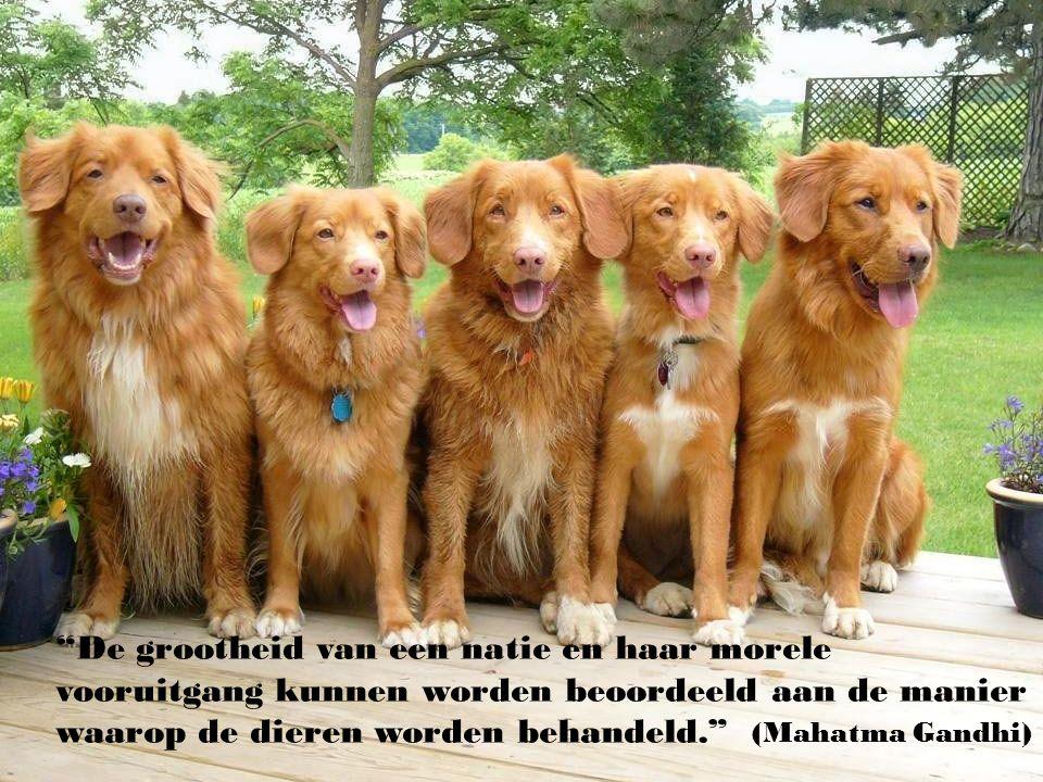 """""""Er zal altijd wel iets zijn, een verlaten hond die verhindert dat u gelukkig bent."""" ( Aldous Huxley )"""