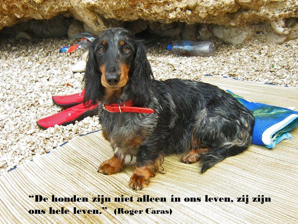 """"""" Iedereen die in zijn leven aan de liefde gelooft zal ons dit niet duidelijker kunnen maaken dan een kind, dat gisteren zijn hond heeft verloren…"""" ("""