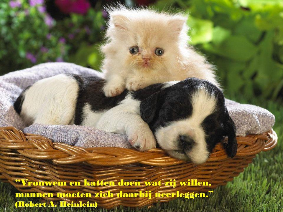 """"""" Een leven zonder hond is een vergissing."""" (Carl Zuckmayer)"""