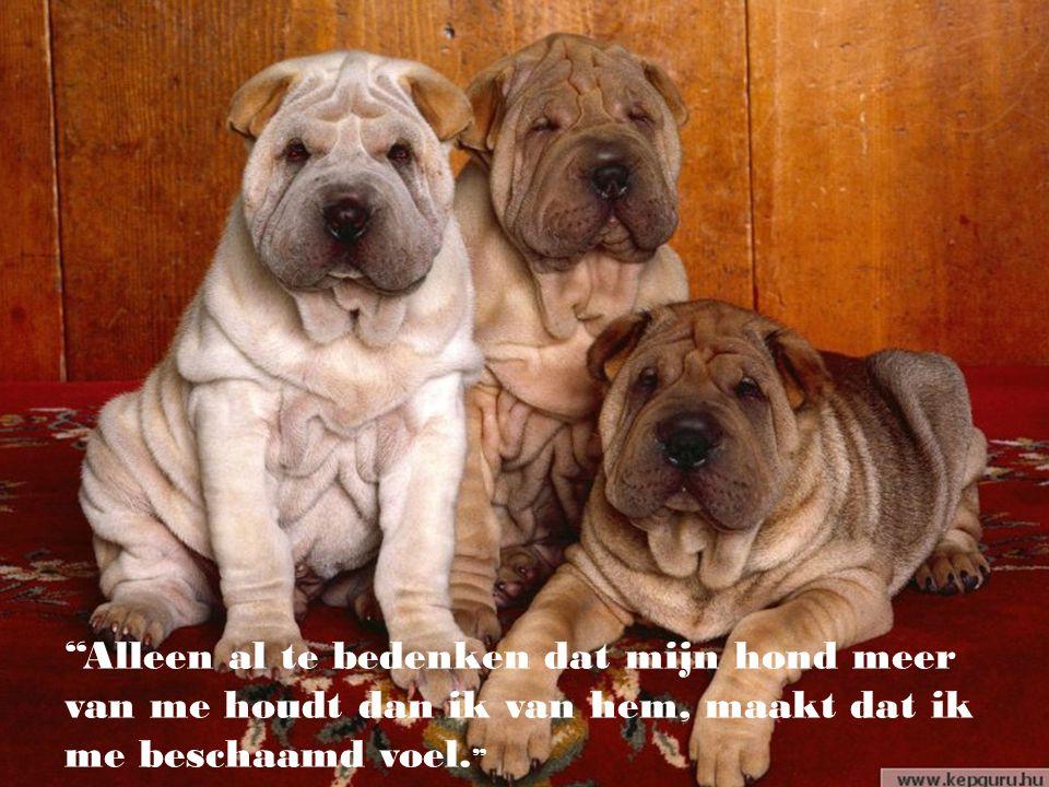 """""""De honden zijn niet alleen in ons leven, zij zijn ons hele leven."""" (Roger Caras)"""